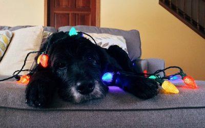 Consejos navideños Dardipet para el bienestar de tu compañer@ animal