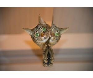 Como presentar a nuestr@ gat@ un nuevo gat@.