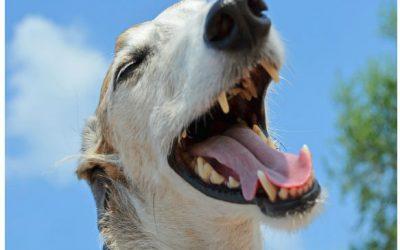 El cuidado de la boca de tu perr@ y gat@