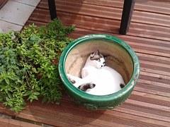 Mi primer gat@