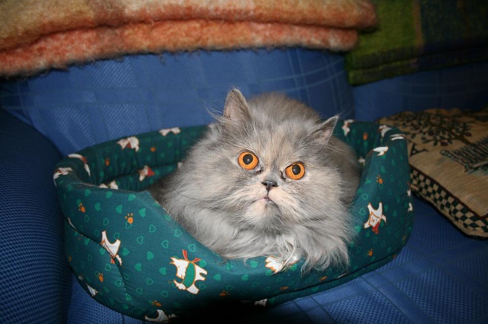 cat-568697_960_720