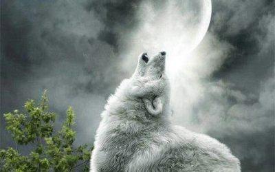 Los lobos y la luna llena