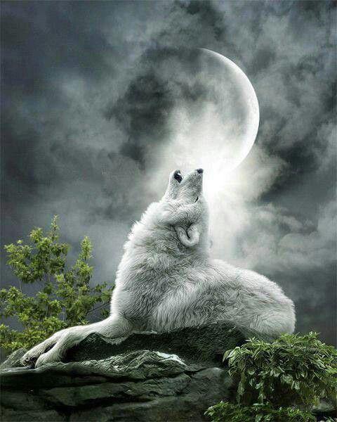 Los Lobos Y La Luna Llena Dardipet