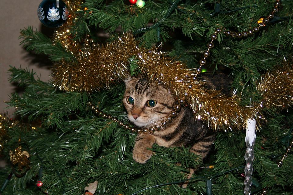 cat-1207460_960_720